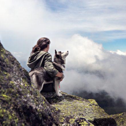 8 conseils pour une randonnée avec des chiens réussie