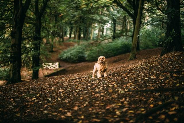 Randonnée avec son chien : ce qu'il faut faire et ne pas faire