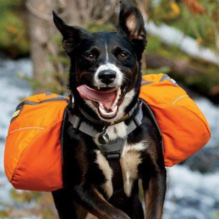Quel sac de randonnée pour chien choisir ?