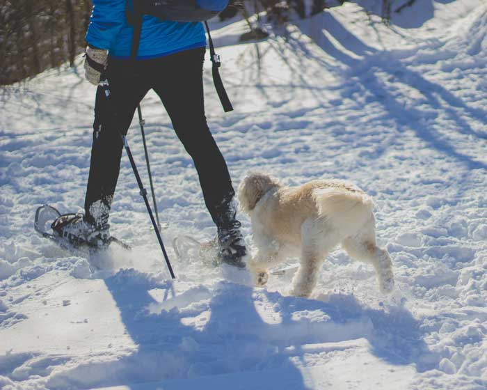 Raquettes à neige : comment débuter sur ce type de randonnée ?