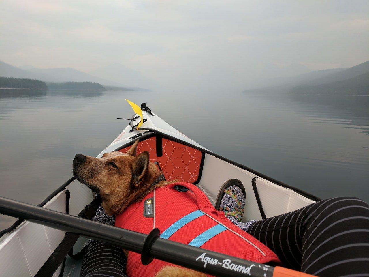 Comment Faire du Kayak avec Votre Chien